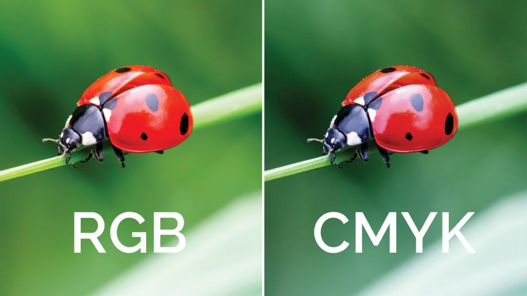 RGM vs CMYK With Ladybugs